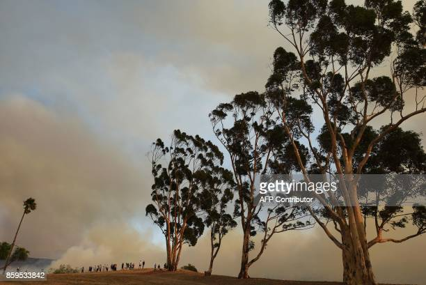 Trees sway in the Santa Ana Winds while people watch smoke rising from the Canyon Fire 2 October 9 2017 in Orange California / AFP PHOTO / Robyn Beck