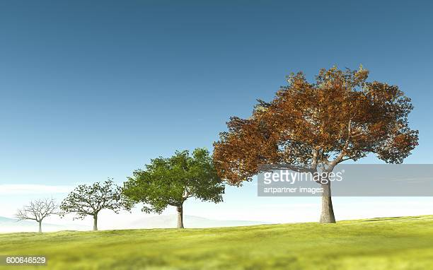trees through four seasons - four seasons stock pictures, royalty-free photos & images