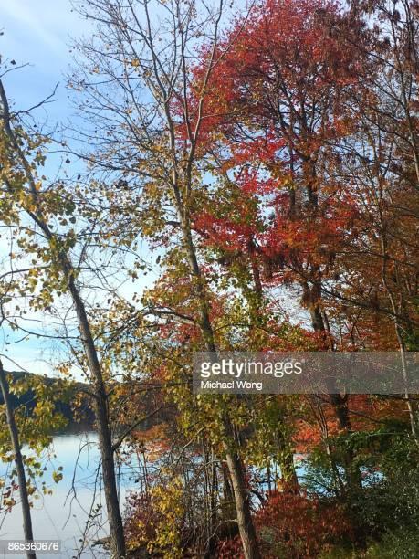 Trees turning Fall foliage in Autumn