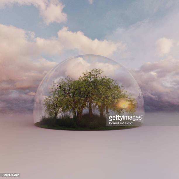 trees under protective glass dome with cloudy summer sky - dome stock pictures, royalty-free photos & images