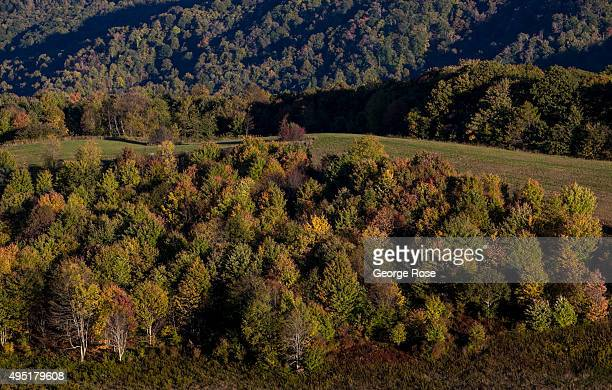 Trees viewed from Max Patch a bald mountain that is a favorite camping spot for those hiking the Appalachian Trail are beginning to turn color on...
