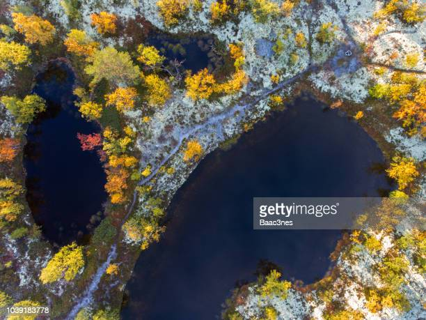 trees, water and meadow covered with lichen seen from above - topography stock pictures, royalty-free photos & images
