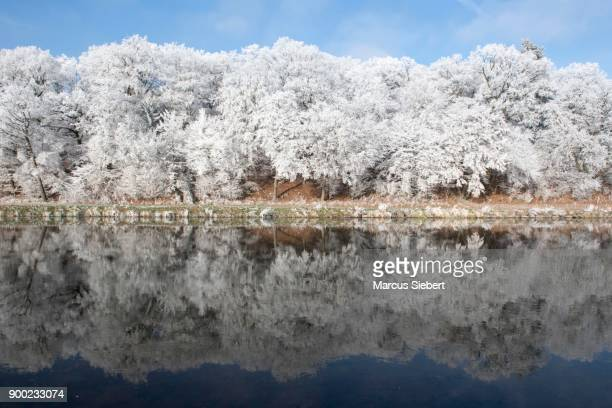 Trees with hoarfrost reflecting in the river, Fulda, Guxhagen, North Hesse, Hesse, Germany