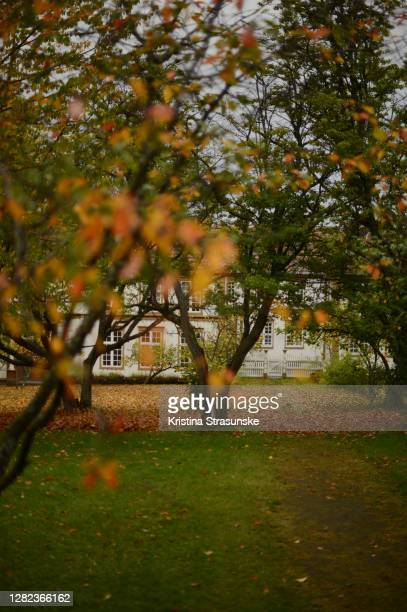 trees with leafs in autumn colors in a garden - kristina strasunske stock pictures, royalty-free photos & images