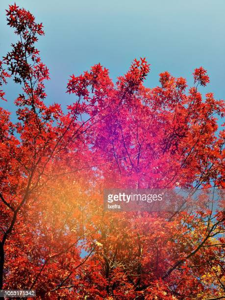 Trees with leaves in bright autumn colors