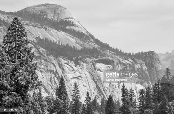 Trees with mountain in background, Yosemite National Park, California, USA