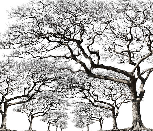 Trees with no leaf