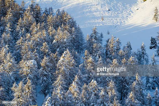 Trees with pristine snow. Alps, Europe.