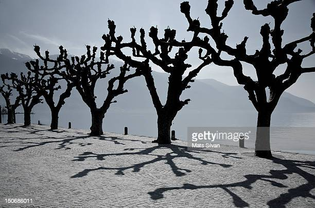 trees with shadows - ascona stock pictures, royalty-free photos & images