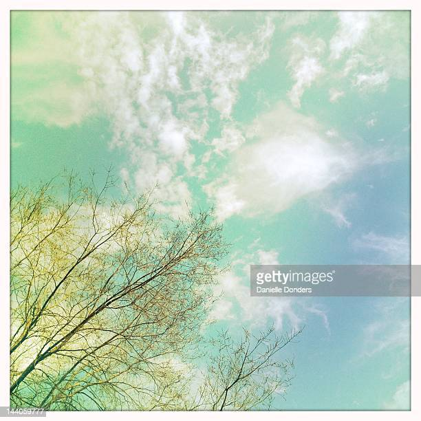 Trees with spring buds against spring sky