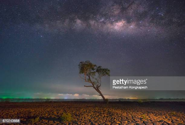 Trees with the Milky Way in Thailand