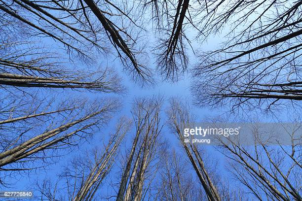 Trees without leaf