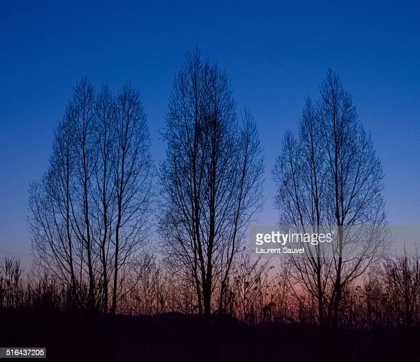 trees without leaves at sunset - laurent sauvel photos et images de collection