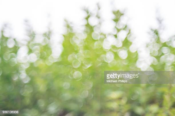 treetop blur - luxuriant stock pictures, royalty-free photos & images