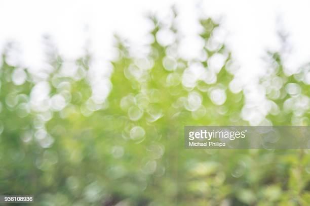 treetop blur