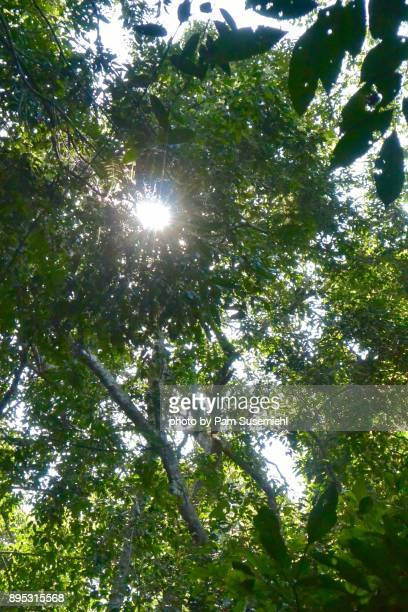 Treetop Forest View, Thailand