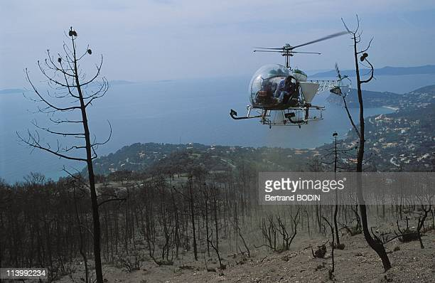 Treetop harvesters In France On October 10 1992Helicopter sows land devastated by fire