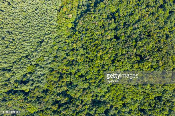 treetop - liyao xie stock pictures, royalty-free photos & images