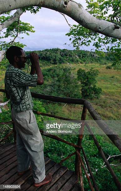 A treetop platform gives a good view of this coastal forest in the Arabuko Sokoke Forest Reserve.