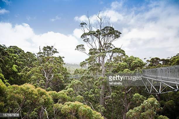 cima a valle dei giants australia occidentale - cima di albero foto e immagini stock
