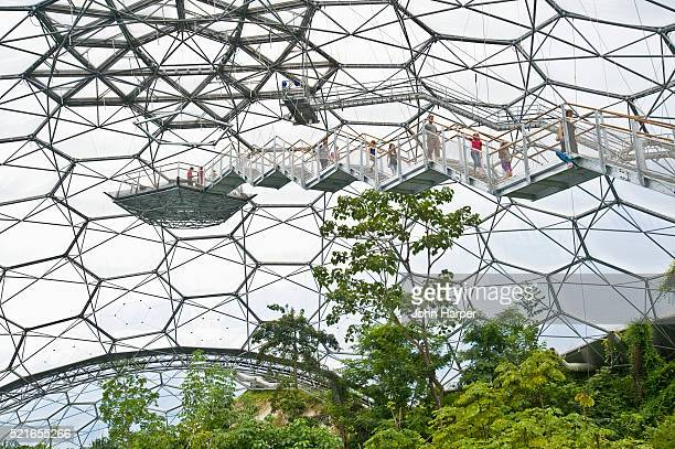 treetop walkway, eden project, cornwall, u.k. - biodiversity stock pictures, royalty-free photos & images