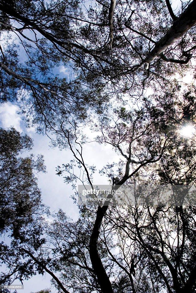 POV of treetops and blue sky : Stock Photo