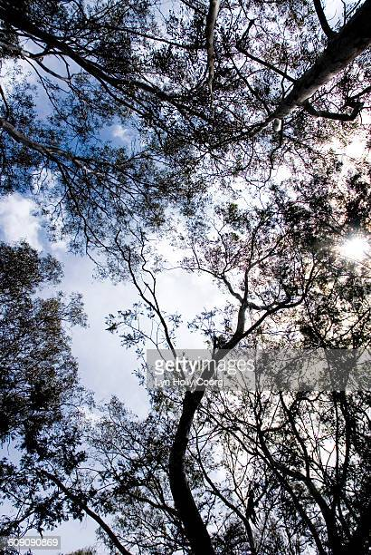pov of treetops and blue sky - lyn holly coorg stock photos and pictures