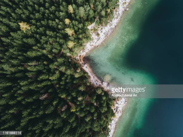 treetops on banks of lake eibsee, bavaria, germany - climate change stock pictures, royalty-free photos & images
