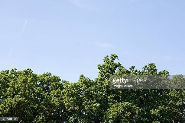 treetops - treetop stock pictures, royalty-free photos & images