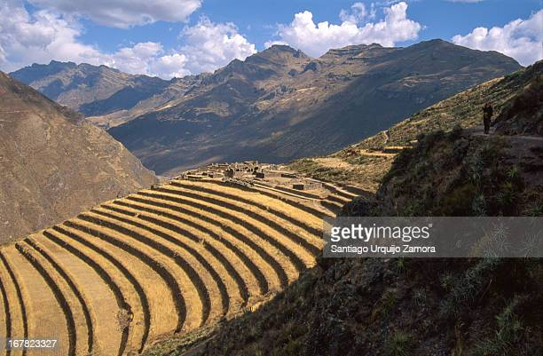 Trekker returns from visiting the famous Incan ruins known as Inca Písac. The ruins lie atop a hill at the entrance to the valley with agricultural...