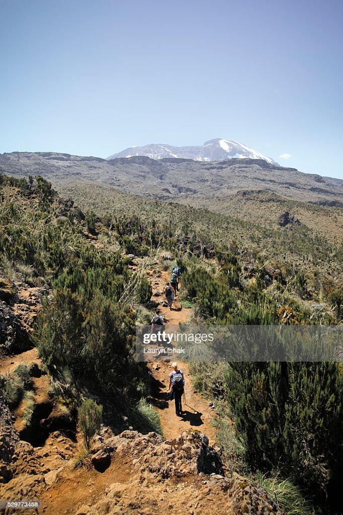 Trekkers on the Machame Route walking under the summit of Mt. Kilimanjaro, Tanzania : Stock Photo