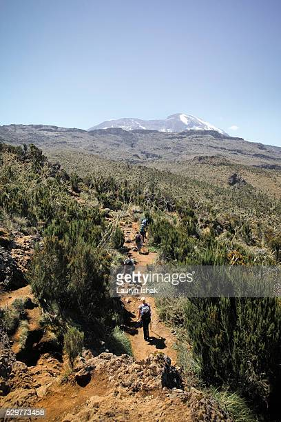 Trekkers on the Machame Route walking under the summit of Mt. Kilimanjaro, Tanzania