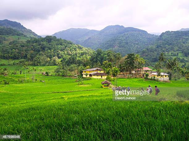 trekking in between rice fields in sri lanka - village stock pictures, royalty-free photos & images