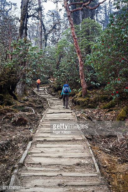 trekking in sikkim, india - sikkim stock pictures, royalty-free photos & images