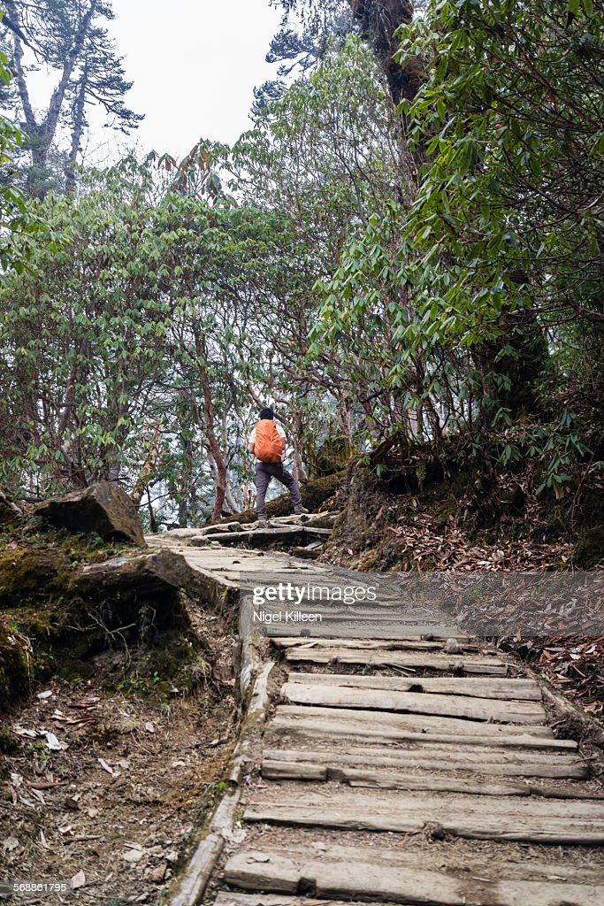 Trekking in Sikkim : Stock Photo