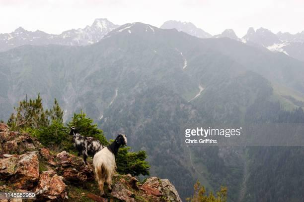 trekking in the kashmir valley - himalaya stockfoto's en -beelden