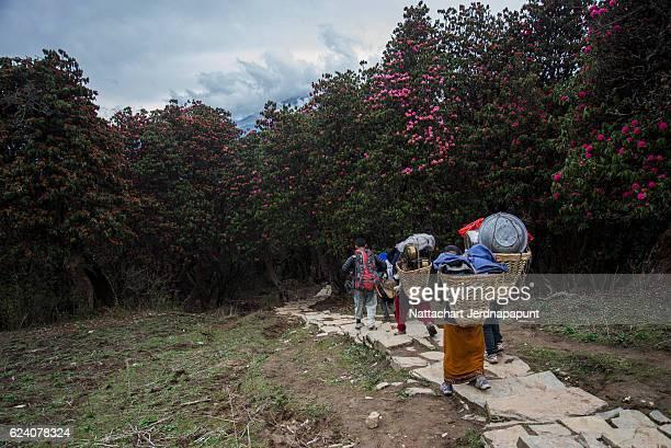Trekking team walk along the way to poonhill, Nepal