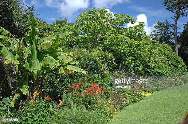 trelissick garden, cornwall - truro cornwall stock pictures, royalty-free photos & images
