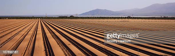 trenched rows ready for planting; mountains beyond - timothy hearsum imagens e fotografias de stock