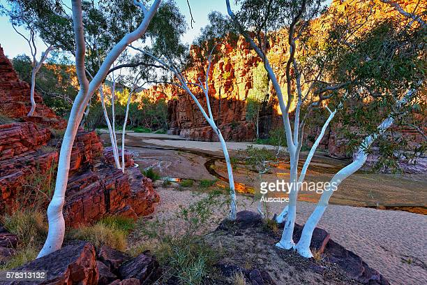 Trephina Gorge with Ghost gums Corymbia aparrerinja Trephina Gorge Nature Park East McDonnell Ranges Northern Territory Australia
