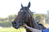 DUCTFORM - The ducting specialists 3YO Maiden Plate
