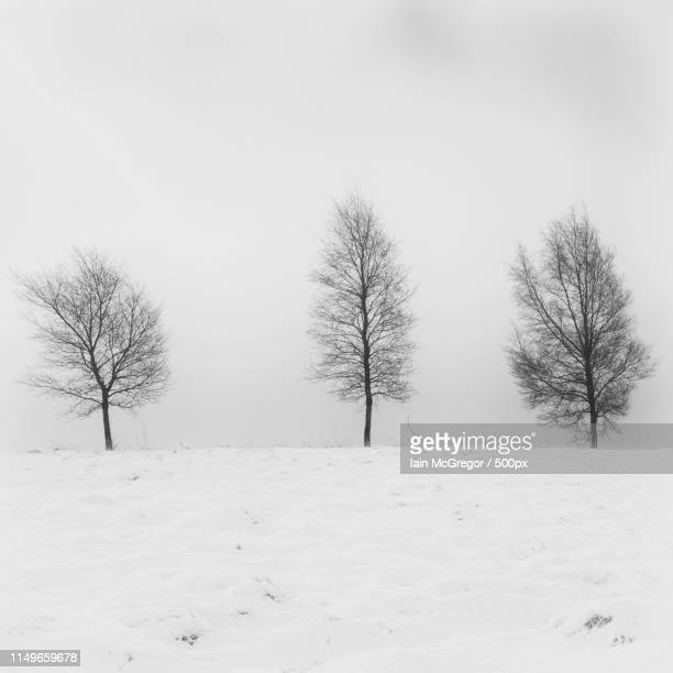 tres trees - mcgregor stock pictures, royalty-free photos & images