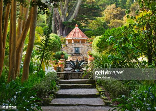 tresco abbey garden - isles of scilly stock pictures, royalty-free photos & images
