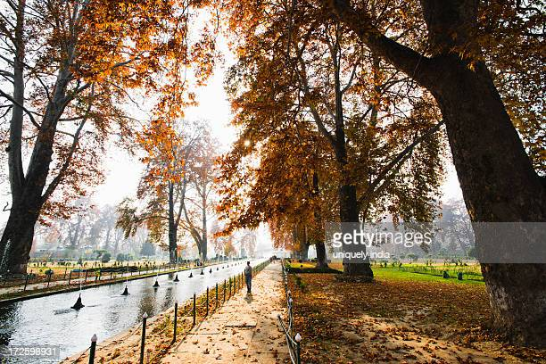 tress and fountain in a garden, shalimar bagh, srinagar, jammu and kashmir, india - kashmir valley stock photos and pictures
