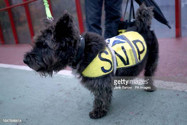 Trex the dog arrives with owner and SNP member Neil Anderson for day two of the party's autumn conference at the SEC Glasgow