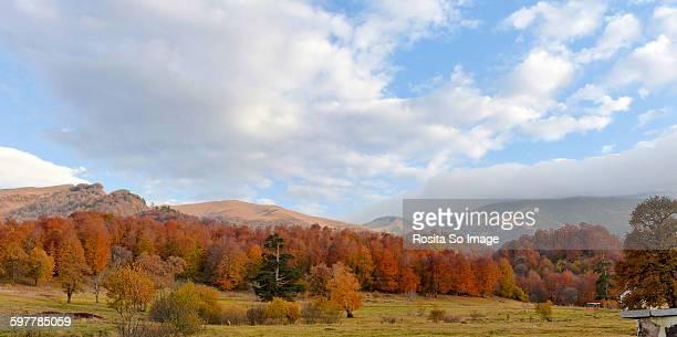 Trialeti range, Borjomi, Georgia