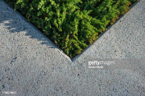 triangle of hedge bordered by concrete - lush stock pictures, royalty-free photos & images