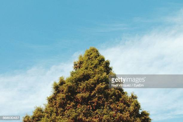 Triangle Shape Of Tree Against Cloudy Sky