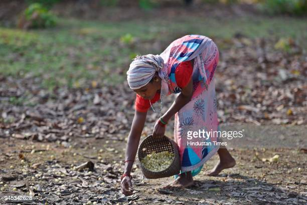 Chhattisgarh Stock Photos And Pictures