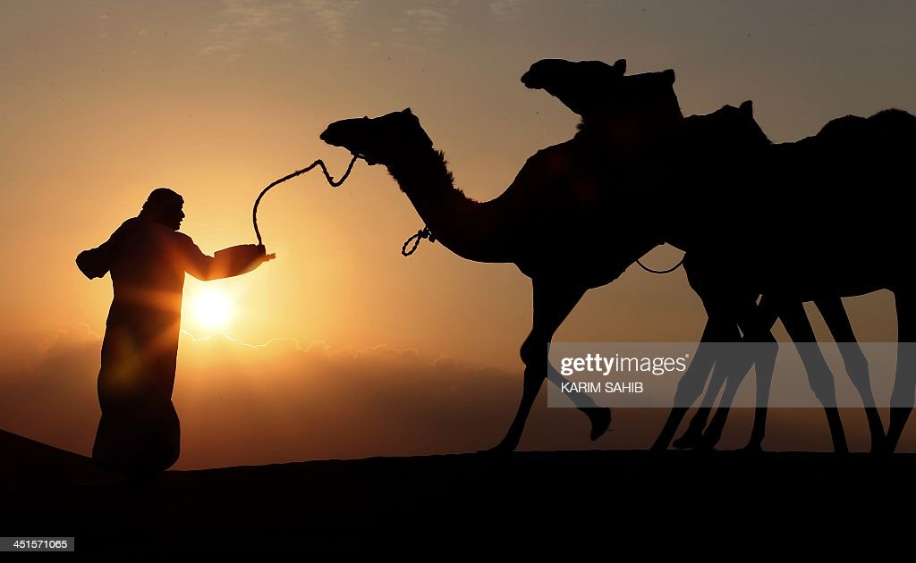 A tribesman leads camels through the sand dunes of the Liwa desert, 220 kms west of Abu Dhabi, on November 23, 2013.